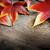 alten · Eiche · Herbst · Park · riesige · Sonne - stock foto © mythja