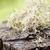 alfalfa sprouts stock photo © mythja