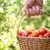 paradicsom · aratás · nyár · gazdák · kezek · frissen - stock fotó © mythja