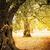olijfolie · bomen · boerderij · middellandse · zee · veld · oude - stockfoto © mythja