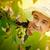 szőlő · aratás · jóképű · mosolyog · szakállas · vág - stock fotó © mythja