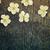 cherry flowers stock photo © mythja