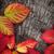 eski · ağaç · havlama · doku · detay · görmek - stok fotoğraf © mythja
