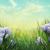 kikerics · tavasz · citromsárga · levelek · természet · gyönyörű - stock fotó © mythja