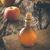 garrafa · maçã · vinagre · vidro · isolado · branco - foto stock © mythja