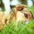 feliz · preto · cão · verão · natureza - foto stock © mythja