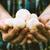 friss · champignon · fából · készült · egészség · étterem · fehér - stock fotó © mythja