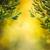 olive · design · estate · fresche · oliva · ramo - foto d'archivio © mythja