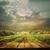 vineyard background stock photo © mythja