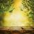 オリーブ · デザイン · 夏 · 新鮮な · オリーブ · 支店 - ストックフォト © mythja