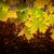 красивой · осень · дерево · листьев · границе · падение - Сток-фото © mythja