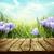 voorjaar · krokus · bloemen · winter · vroeg - stockfoto © mythja