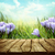 primavera · floral · azafrán · flores · invierno · temprano - foto stock © mythja