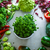 fresh vegetables flatlay overhead frame food layout vegetables variety stock photo © mythja