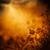 otono · diseno · forestales · caída · floral · hojas - foto stock © mythja