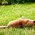собака · женщины · различный · ужас · насекомое · опасность - Сток-фото © mythja