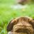 chien · oeil · jack · russell · yeux · iris - photo stock © mythja