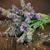 lawendy · kwiaty · świeże · wyschnięcia · suszy · biały - zdjęcia stock © mythja