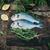hal · pult · étterem · étel · tenger · háttér - stock fotó © mythja