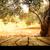 tuin · houten · tafel · groene · bokeh · gras - stockfoto © mythja