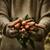 新鮮な · 人参 · オーガニック · 野菜 · 健康食品 · 農民 - ストックフォト © mythja
