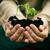plant · foto · handen · jonge · business · palm - stockfoto © mythja