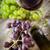 natürmort · kırmızı · beyaz · şarap · gözlük · namlu · üzüm - stok fotoğraf © mythja