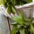 vers · kruiden · rosmarijn · mint · rustiek · voorjaar - stockfoto © mythja
