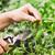 ножницы · работник · зеленый · весны · природы - Сток-фото © mythja