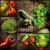frissen · gyógynövények · öreg · antik · olló · fa - stock fotó © mythja