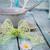 mavi · plaka · yeşil · peçete · çatal · bıçak · takımı · çatal - stok fotoğraf © mythja