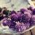 新鮮な · チャイブ · 切り · 食品 - ストックフォト © mythja