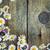 alan · papatyalar · kır · çiçekleri · çiçek · doğa · manzara - stok fotoğraf © mythja