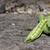 zöldborsó · termény · frissen · szett · tájkép · formátum - stock fotó © naffarts