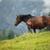 cavalo · alpino · cavalos · alpes · montanha - foto stock © nailiaschwarz