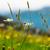альпийский · луговой · травы · растений · лет · трава - Сток-фото © nailiaschwarz