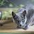 静物 · 猫 · 花 · ロシア · 青 · 肖像 - ストックフォト © nailiaschwarz
