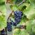 najaar · Rood · wijnstokken · vallen · decoratie - stockfoto © nailiaschwarz