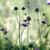alpesi · legelő · gyógynövények · növények · nyár · fű - stock fotó © nailiaschwarz