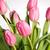 розовый · тюльпаны · белый · природы · фон - Сток-фото © nailiaschwarz