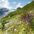 alpesi · legelő · gyógynövények · virágok · nyár · fű - stock fotó © nailiaschwarz