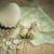 yumurta · ördek · yumurta · farklı · tablo · düğmeler - stok fotoğraf © nailiaschwarz
