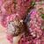 közelkép · barna · szőlőtőke · csiga · hordoz · kicsi - stock fotó © nailiaschwarz