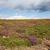 colorido · vegetación · detalle · alrededor · paisaje · verano - foto stock © nailiaschwarz