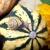 カボチャ · 秋 · 画像 · 小 · 庭園 · 花 - ストックフォト © nailiaschwarz