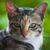 cats head   looking at camera stock photo © nalinratphi