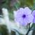 装飾的な · 花 · 植木鉢 · 孤立した · 白 · 春 - ストックフォト © nalinratphi