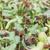 girassol · plântula · semente · isolado · branco · cópia · espaço - foto stock © nalinratphi