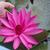 Rood · vreedzaam · vijver · bloem · water - stockfoto © nalinratphi