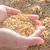 kuru · pirinç · tohumları · kitle · ürün · arka · plan - stok fotoğraf © nalinratphi